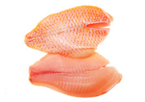 RED SNAPPER FILLET